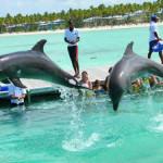 Dolphin Island Park, nadar con delfines en Punta Cana