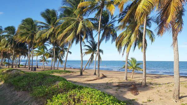 Isla de Vieques - palmeras