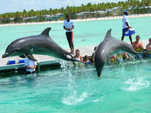 Dolphin Island Park