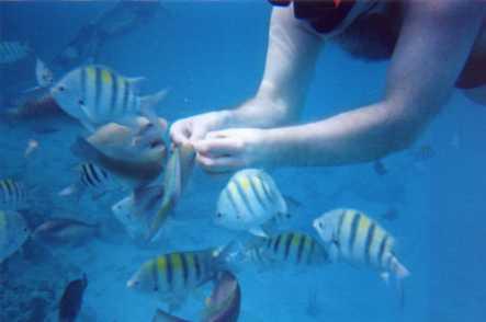 Buceo en las islas Virgenes
