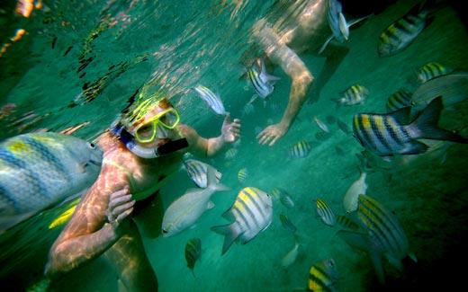 Snorkel en las Bahamas