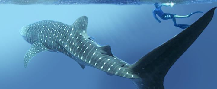 Nadar con tiburones en Playa del Carmen