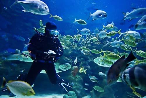 Bloody Bay Wall, peces, barcos y corales