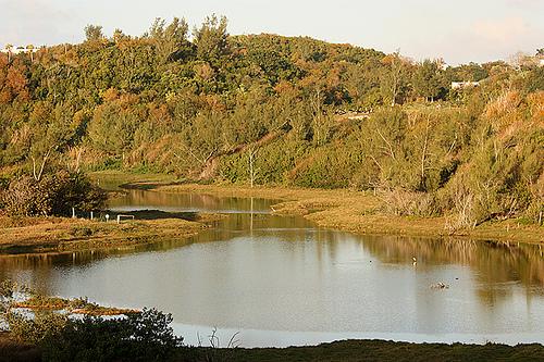 Reserva natural estanque spittal paraiso en bermudas for Estanque natural