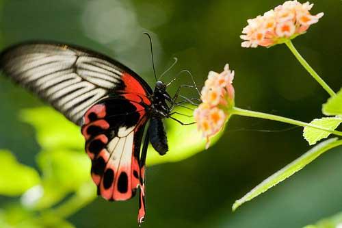 butterfly farm 2