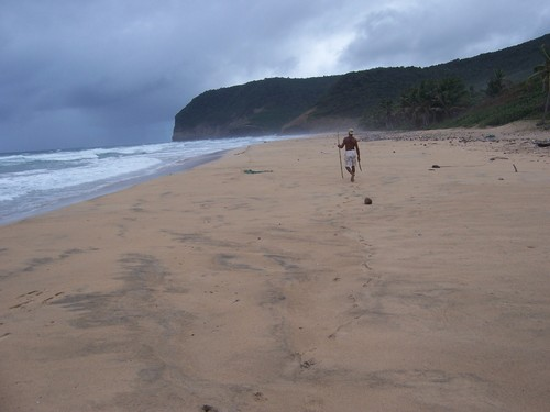 Playa Grand Anse, tortugas en Santa Lucía