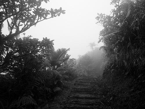Chemin Letang, el sendero milenario de Dominica