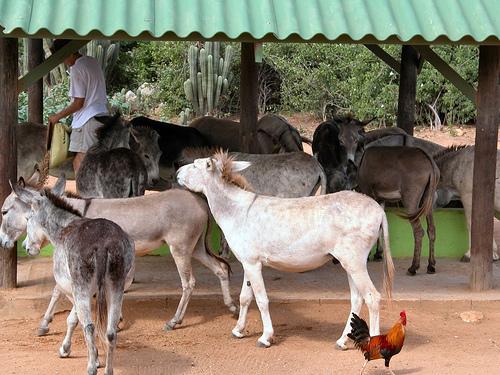 santuario de burros