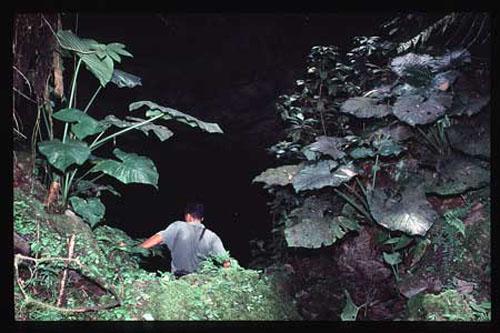 Las Cuevas de Aripo, en Trinidad