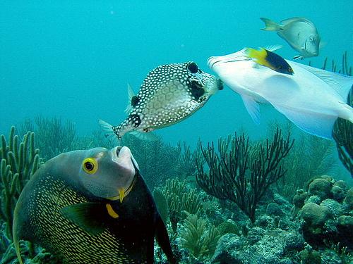 buceo en caribe