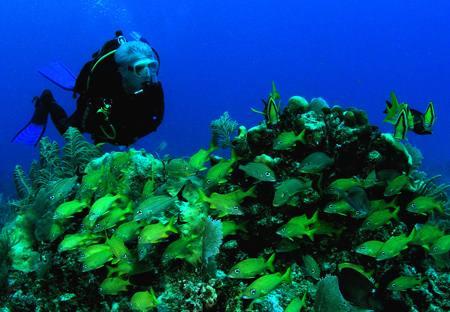 buceo en yucatan