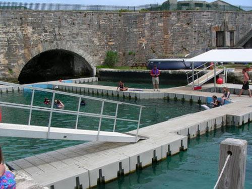 Nadar con delfines en Bermudas