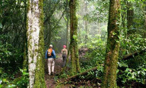 Surinam, destino de ecoturismo