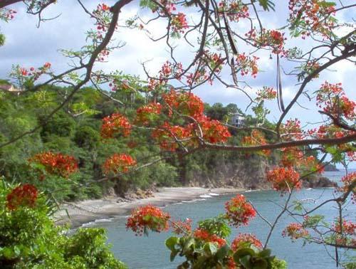 Top 5 de las mejores playas de Montserrat
