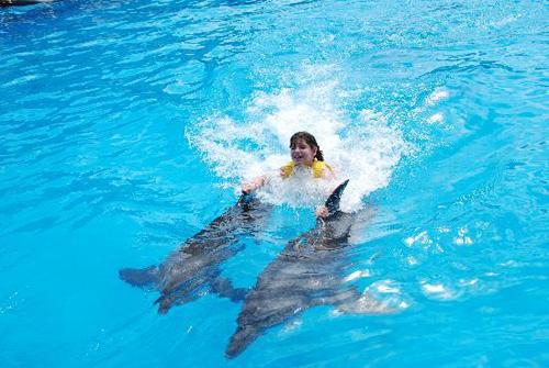 Nadar con delfines y lobos marinos en Cancún