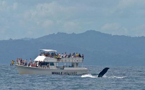 Avistamiento de ballenas en el Caribe